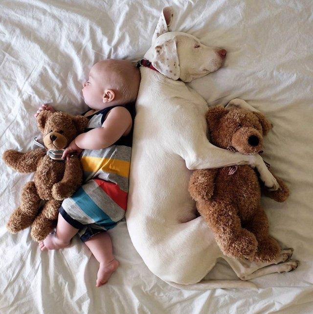 abused-rescue-dog-love-child-nora-elizabeth-spence-35