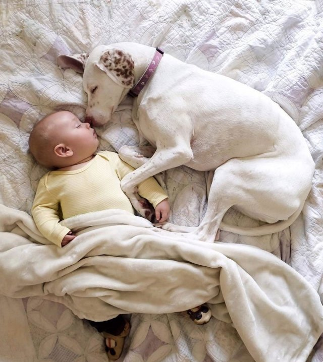 abused-rescue-dog-love-child-nora-elizabeth-spence-40