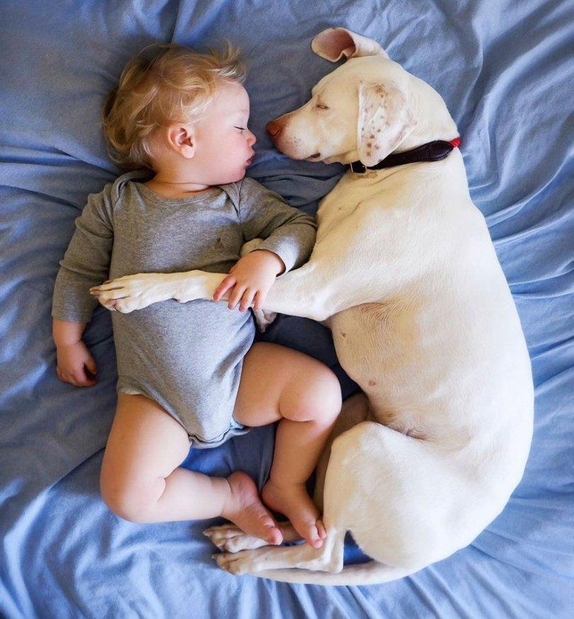 abused rescue dog love child nora elizabeth spence 41 - O melhor amigo do homem