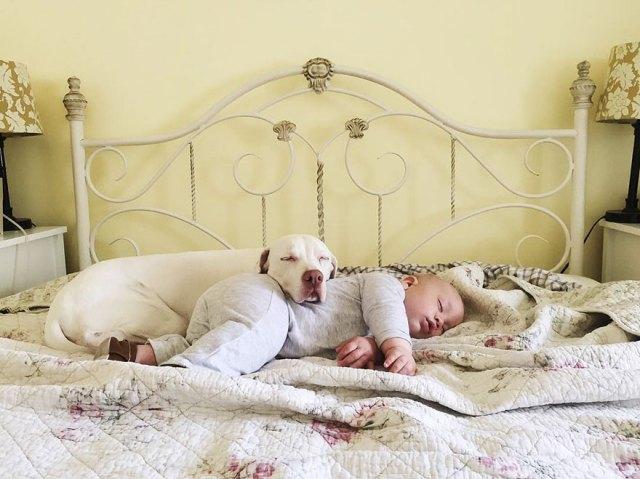 abused-rescue-dog-love-child-nora-elizabeth-spence-42
