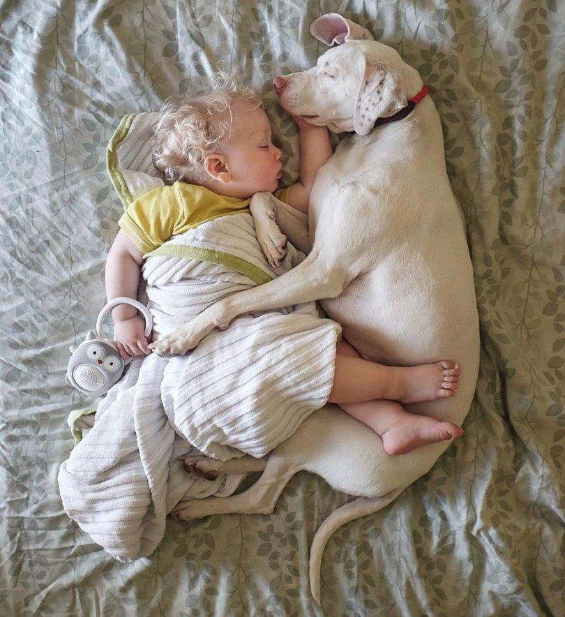 abused rescue dog love child nora elizabeth spence 45 - O melhor amigo do homem