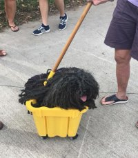 Woman Dresses Her Dog As A Mop, And Its Probably The Best
