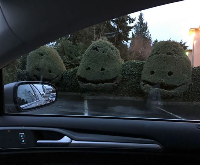 Los arbustos en el aparcamiento de la clínica dental