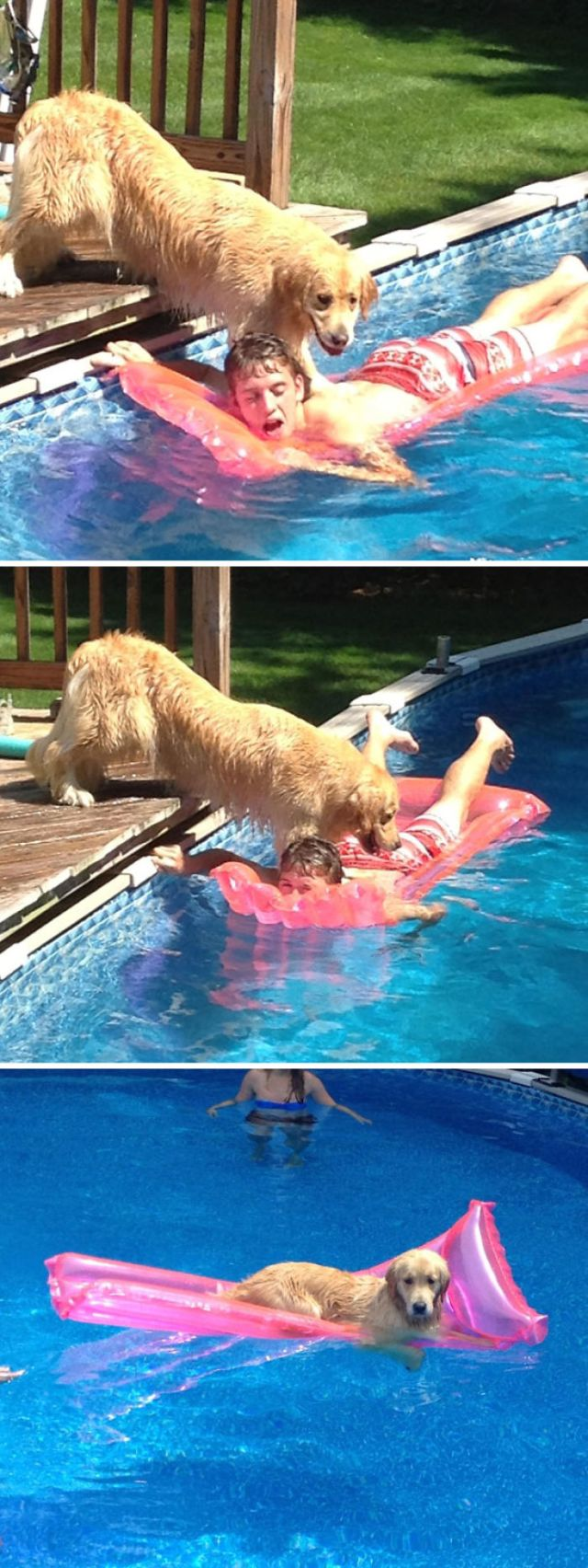 My Dog Drowning Me For My Raft