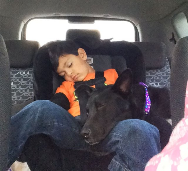My Son And Our Dog veinte Minutes After We Adopted Her