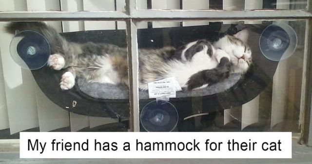62 Spoiled Cats That Probably Live Better Than You