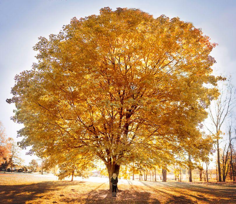 10 Fall photos to get you in the Autumn mood 59fc91a155363  880 - 35 fotos de Outono que o farão querer se tornar um fotógrafo