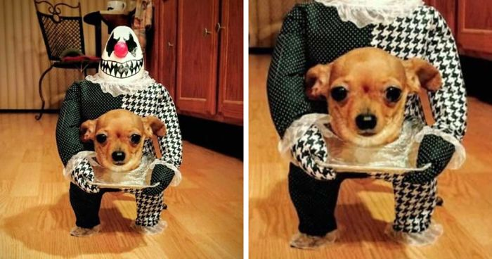 89 Terrifyingly Pawsome Halloween Costumes For Dogs Bored Panda