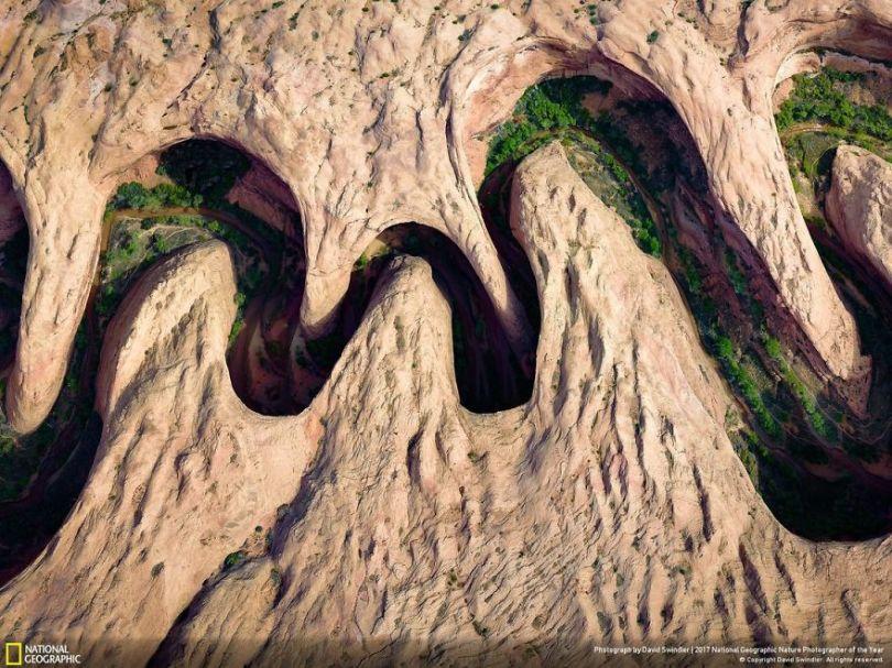 DAVID SWINDLER 5a033e03eeaad  880 - 27 finalistas da National Geographic 2017 - categoria Natureza