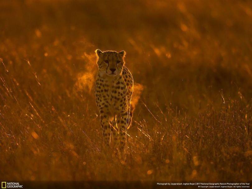JAYAPRAKASH JOGHEE BOJAN 5a033e5daab1f  880 - 27 finalistas da National Geographic 2017 - categoria Natureza