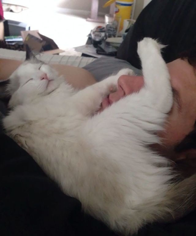Al gatito le agrada dormirse en la hacia de mi novio en mitad de la noche. Me los encuentro así por la mañana