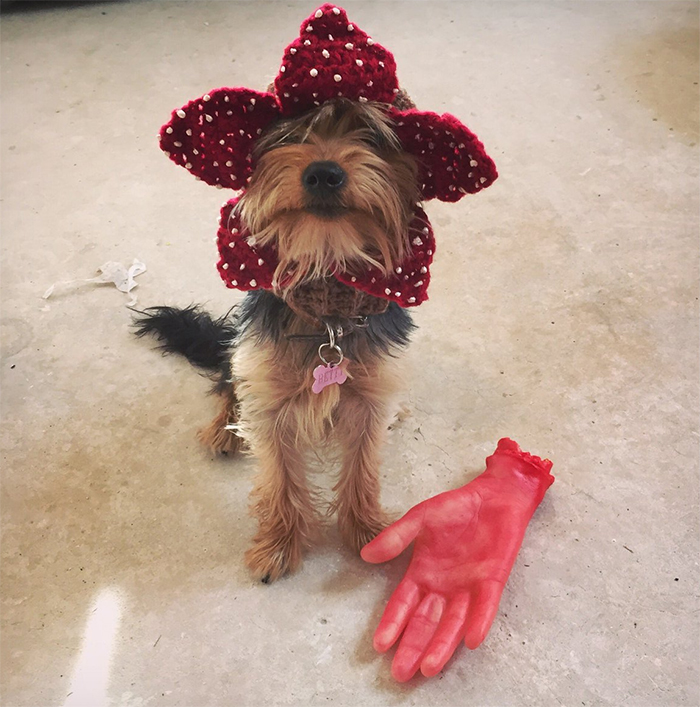 Demogorgon Dog Hat