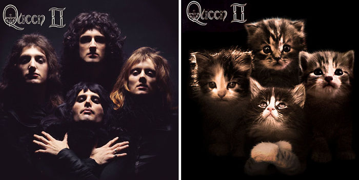 Funny-Gattino-album-Covers
