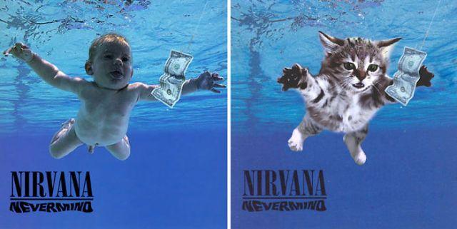 Funny-Gattino-album-Covers