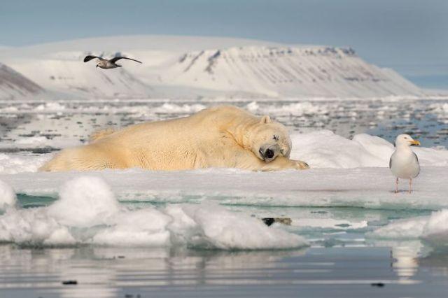 Soñando Sobre Hielo En El Mar, Roie Galitz (1º En Hielo Frágil)