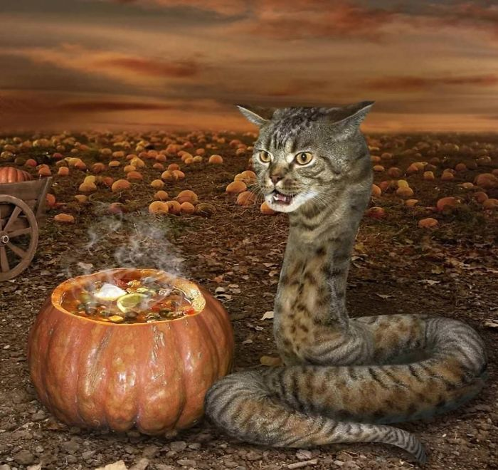 Cat Snake Cooking A Magical Potion