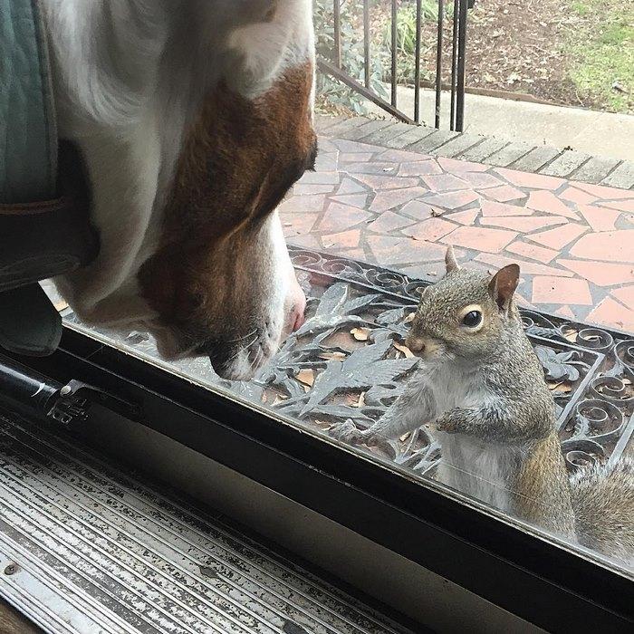 squirrel-come-back-save-family-bella-brantley-harrison-22