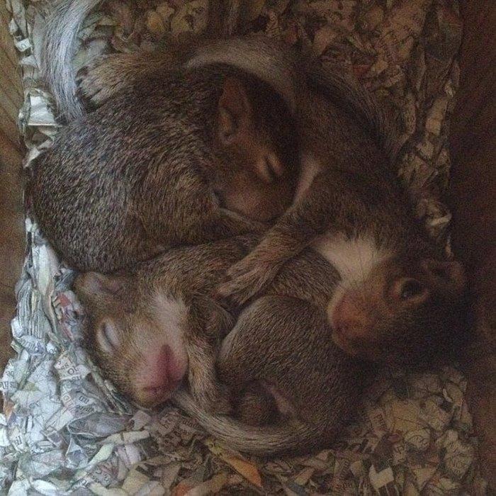 squirrel-come-back-save-family-bella-brantley-harrison-26
