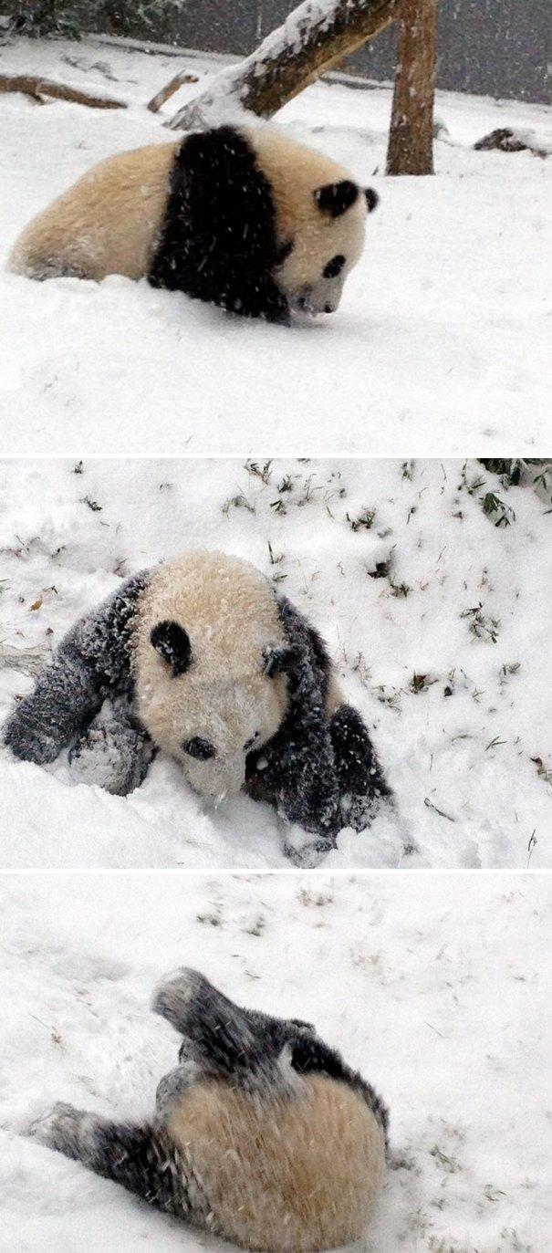 Panda Cub's First Snow Day
