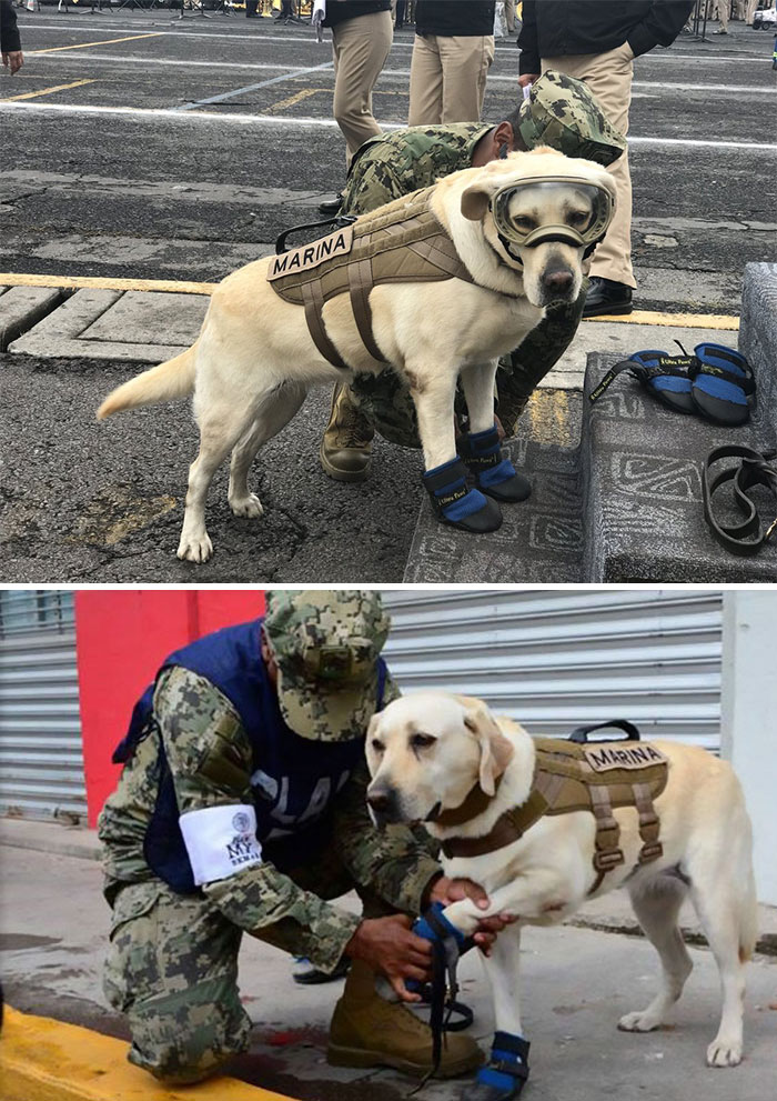 This Is Frida - The Good Girl Who Saved 52 People From Mexico's Earthquake
