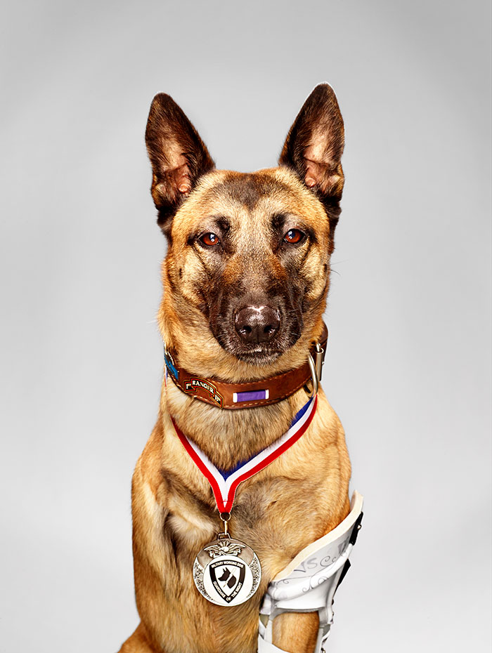 Layka The Hero Military Dog. Despite Getting Shot 4 Times By An Ak-47 At Point Blank Range, She Still Attacked And Subdued The Insurgent Who Was Attacking Her Handler She Survived A 7 Hour Surgery And Was Recently Awarded A Medal For Her Heroism