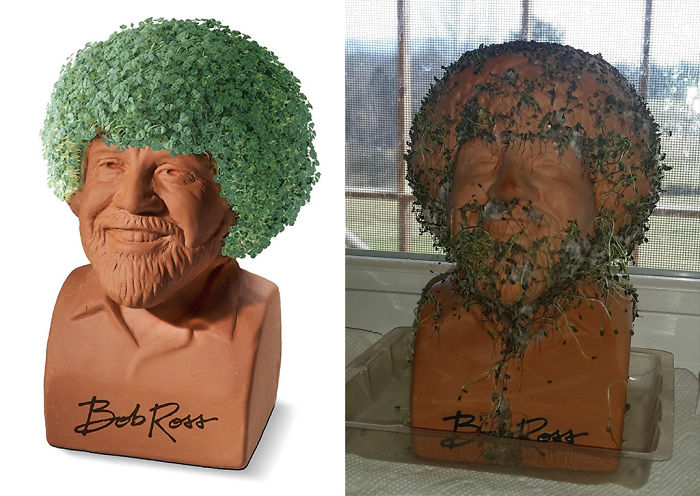 We Got A Bob Ross Chia Pet For Christmas!