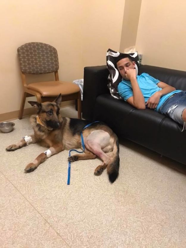 Dog-hero-almost-loses-his-life-by-saving-his-owner-from-criminals-5a93e71a4b696__700 Brave Dog Gets Shot While Protecting His 16-Year-Old Owner From Armed Intruders Design Random