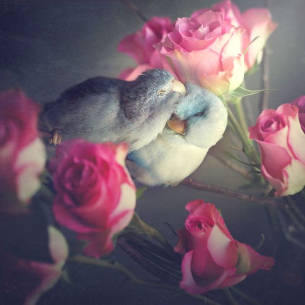 Z1A0051-Edit-Edit-copy-5a832c3b97672__880 I Document A Storybook Love Between My Pastel Parrotlets, And The Result Will Melt Your Heart Design Random