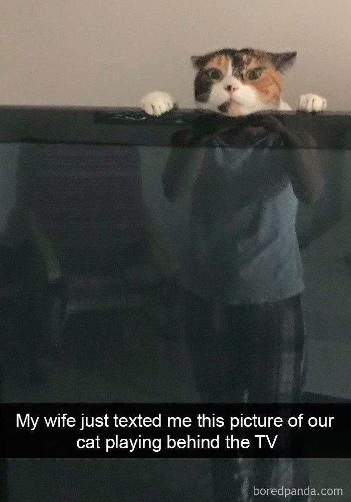 17 Funny Cat Memes
