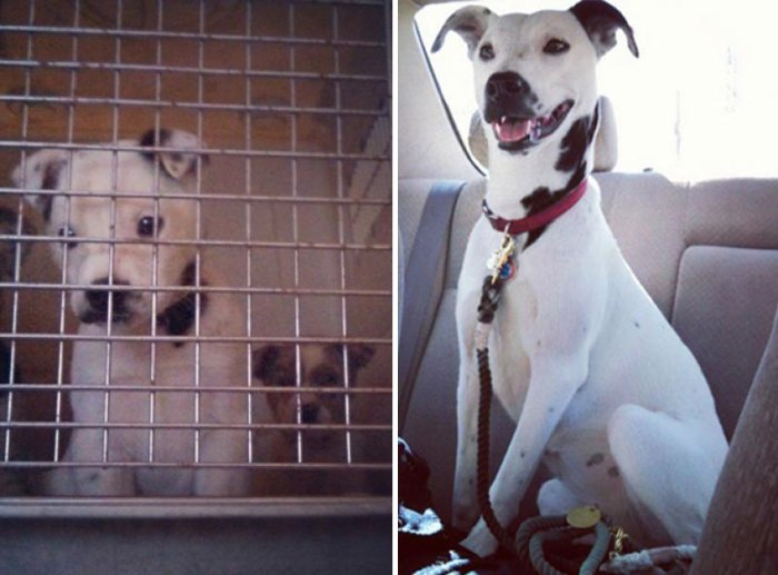 Before And After Adoption