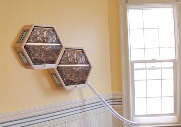 indoors-outdoors-bee-hives-beecosystem-6-5a868c4c617f8__700 Genius Company Installs Beehives In Your Living Room, And Here's How It Works Design Random