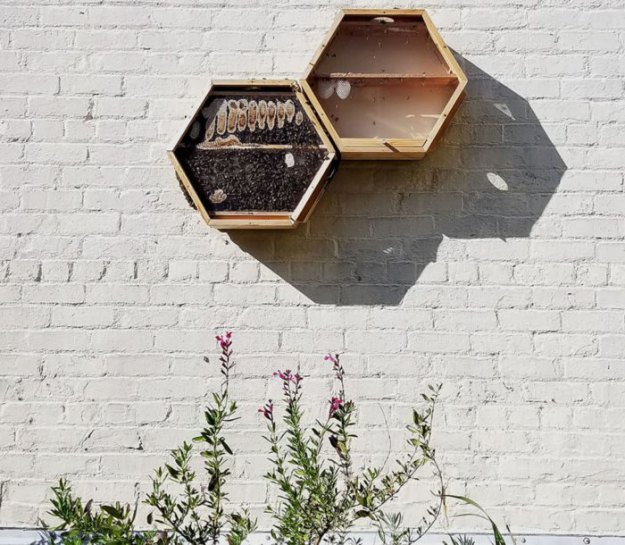 indoors-outdoors-bee-hives-beecosystem-8-5a868c4fa6dc0__700 Genius Company Installs Beehives In Your Living Room, And Here's How It Works Design Random