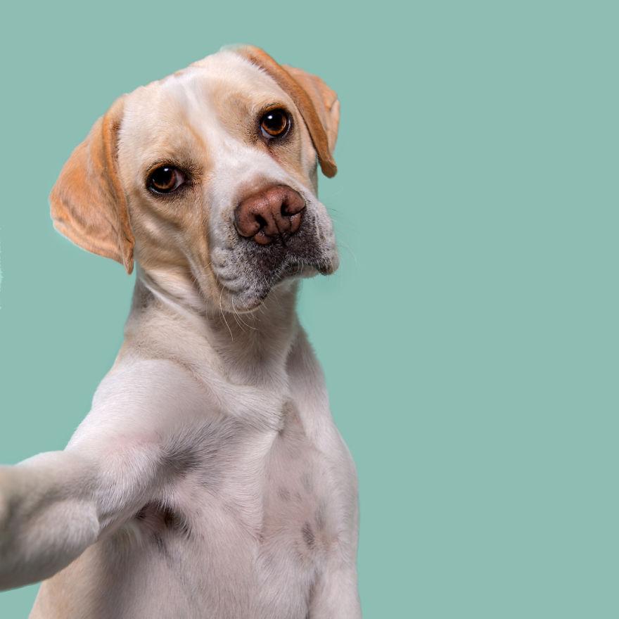 curiosas fotos de perros Compassionate Clooney