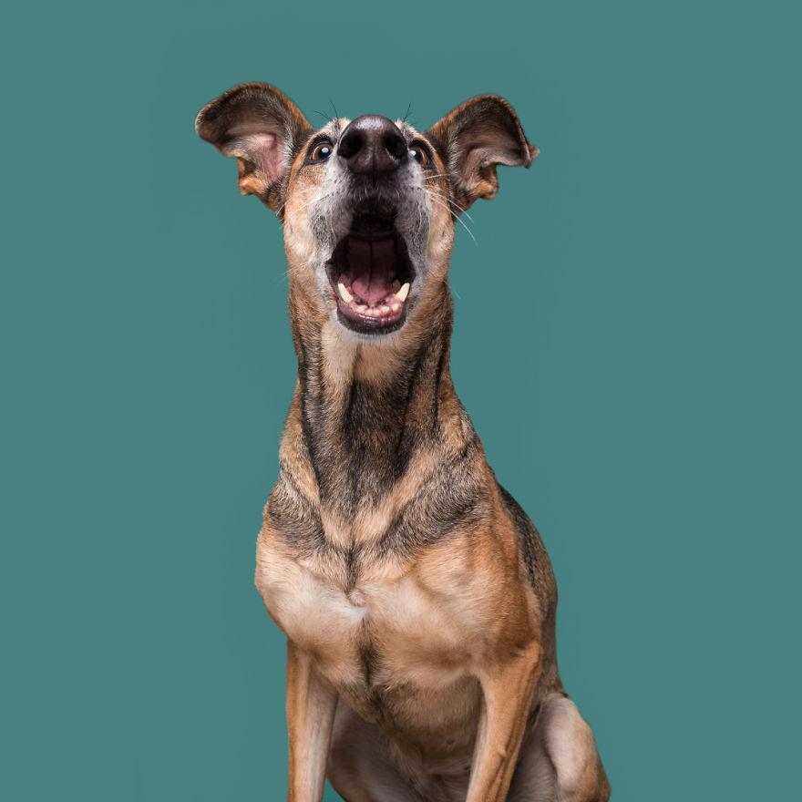 curiosas fotos de perros Shocked Noodles