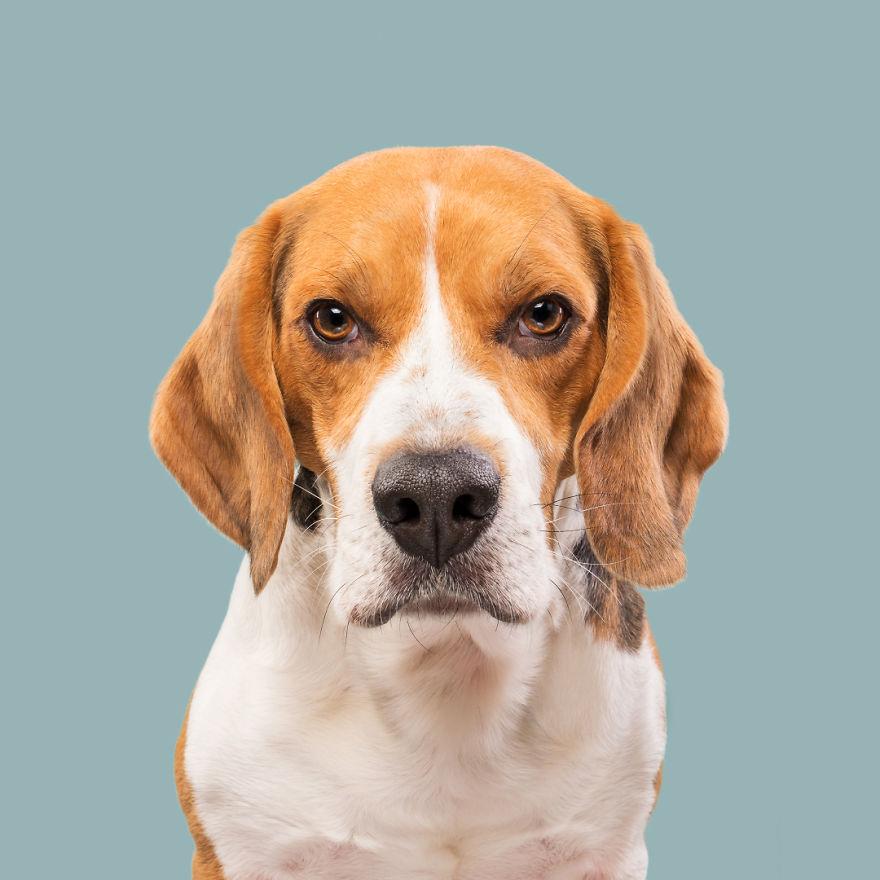 curiosas fotos de perros Not So Pleased Ernie
