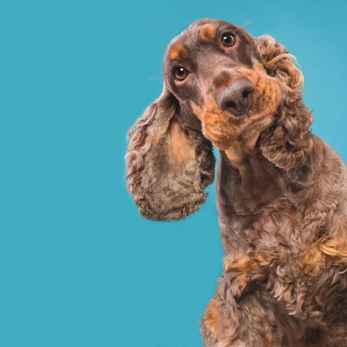 20171116-CuriousChico-5ab95d976ed40__700 I Photograph Dogs To Show How Unique Every Single Of Them Is Design Photography Random