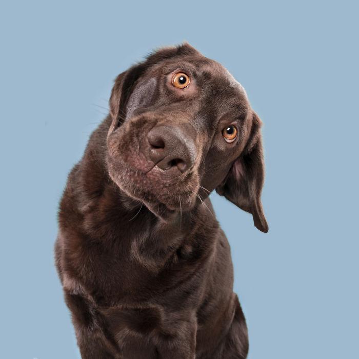 20180227-QuizzicalBodo-5ab95da9cab0a__700 I Photograph Dogs To Show How Unique Every Single Of Them Is Design Photography Random