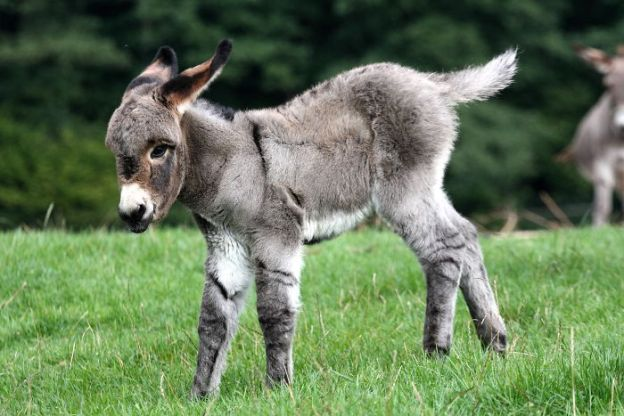 5a97f57397200_3677338593_bf5ca5858a_o__700 These 25+ Cute Baby Donkeys Are Everything You Need To See Today Design Random