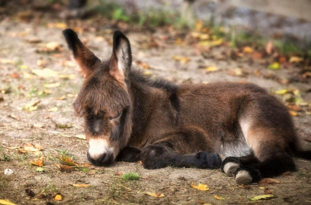 5a97fe5509416__700 These 25+ Cute Baby Donkeys Are Everything You Need To See Today Design Random