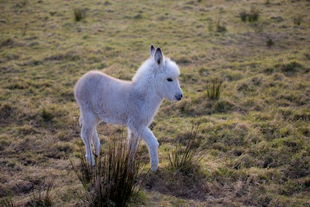 5a9800868580b_8614393042_3f68e9f63b_o__700 These 25+ Cute Baby Donkeys Are Everything You Need To See Today Design Random