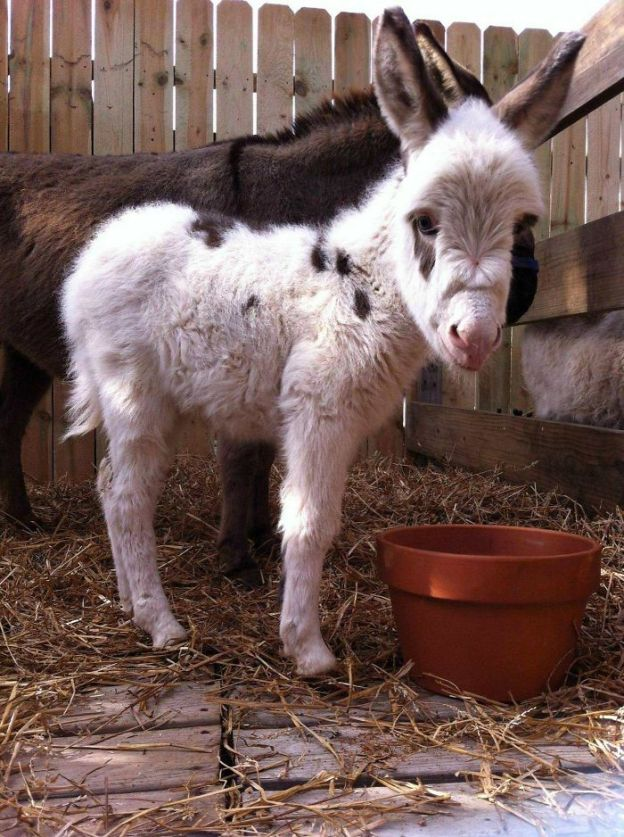 5a980c0367ddb_sDclAr__700 These 25+ Cute Baby Donkeys Are Everything You Need To See Today Design Random
