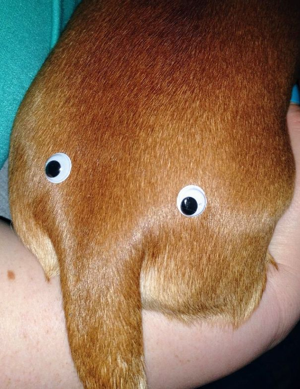 """My Boyfriend Ordered 500 Googly Eyes """"For Reasons"""" And This Is One Of The First Things He Did"""