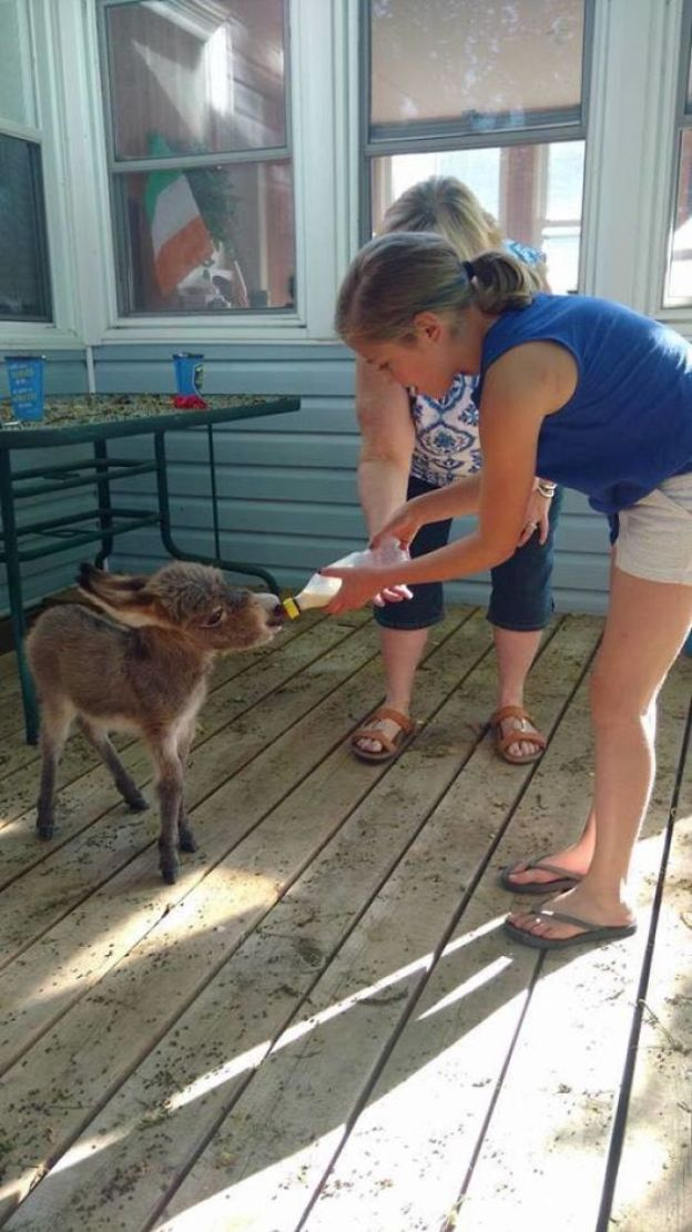 5aa947a23db20_21271121_113627349327536_4122392510480900276_n__700 These 25+ Cute Baby Donkeys Are Everything You Need To See Today Design Random