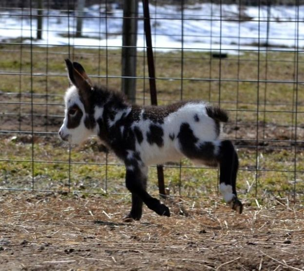 5aaa76f1d07a7_13961040017_1aa7ea7552_o__700 These 25+ Cute Baby Donkeys Are Everything You Need To See Today Design Random