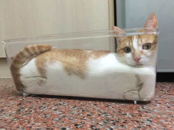A Liquid Has No Fixed Shape Therefore It Takes The Shape Of Any Container