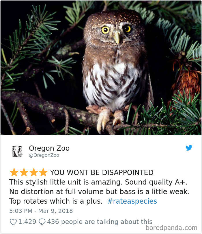 Amazon Animal Review