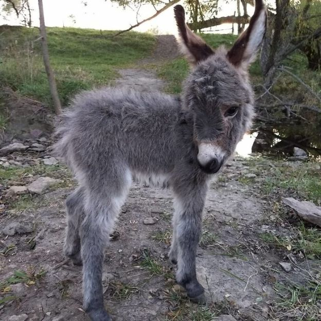 BapoVPXDXLi-png__700 These 25+ Cute Baby Donkeys Are Everything You Need To See Today Design Random