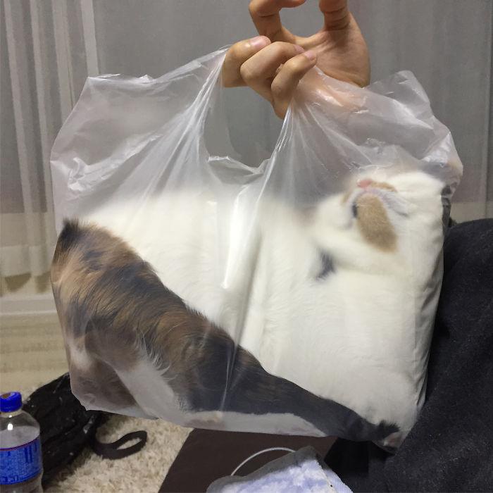 Cat Is Liquid