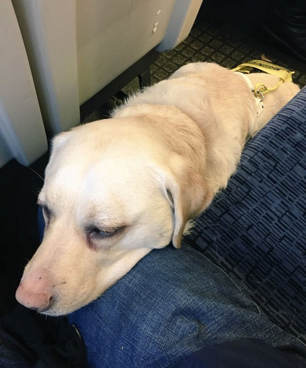 blind-man-guide-dog-no-one-offers-train-seat-london-amit-patel-12-5abde456c6050__700 Blind Man Left In 'Tears' After Nobody Gave Up Their Seat For Him And His Guide Dog On The Train Design Random