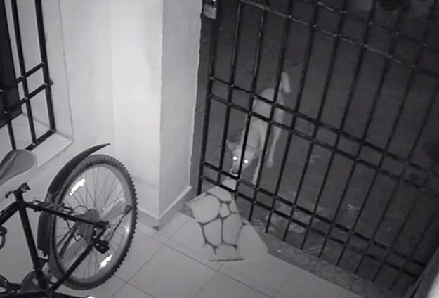 caught-doormat-robber-roshni-10 Guy Installs Secret Camera To Catch The Thief That Keeps Stealing His Things, Can't Believe His Eyes Design Random